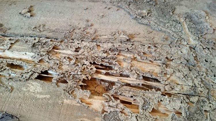 シロアリに侵食された木材